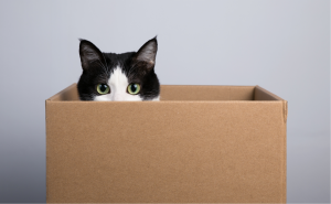 Herding Schrödinger's Cats: The Limits of the Social Science Approach to International Law